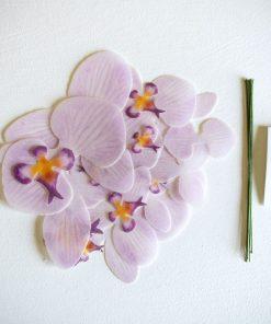 Websafe-Orchid-2-scaled