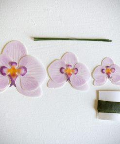 Websafe-Orchid-scaled